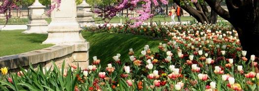 Manutenzione giardini potature siepi cura giardini brescia for Architettura giardini