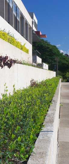 Progettazione realizzazione giardini manutenzione for Architettura verde